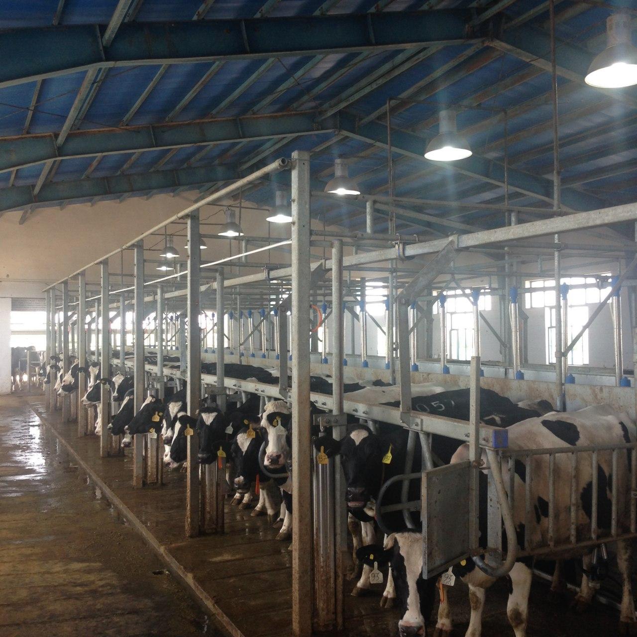 Zafar farm